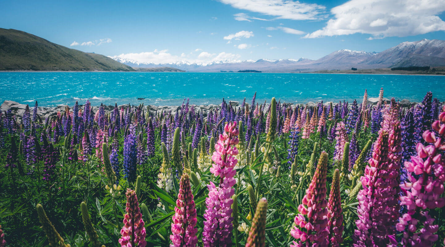 Moving to New Zealand: A guide for expats - TransferWise