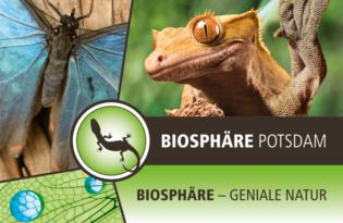 Tropisches Naturabenteuer in der Biosphäre Potsdam für Jung und Alt