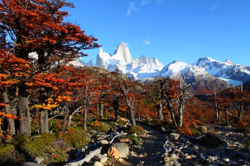 Fitz Roy Forest in Patagonia