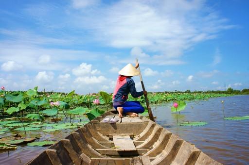 Mekong Delta Water Lillies