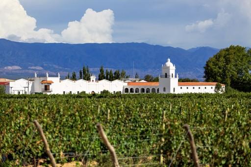 Argentina Vineyard