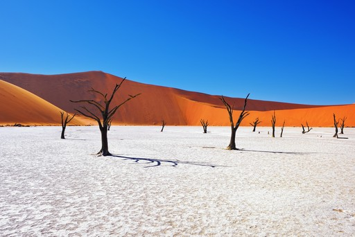The dead trees in Namibia