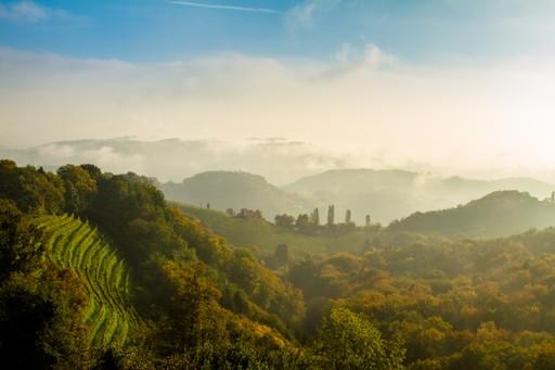 Autumnal vineyards in Austria