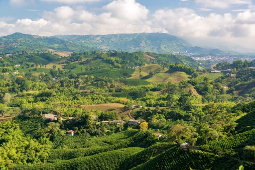 Manizales - Coffee fields Colombia