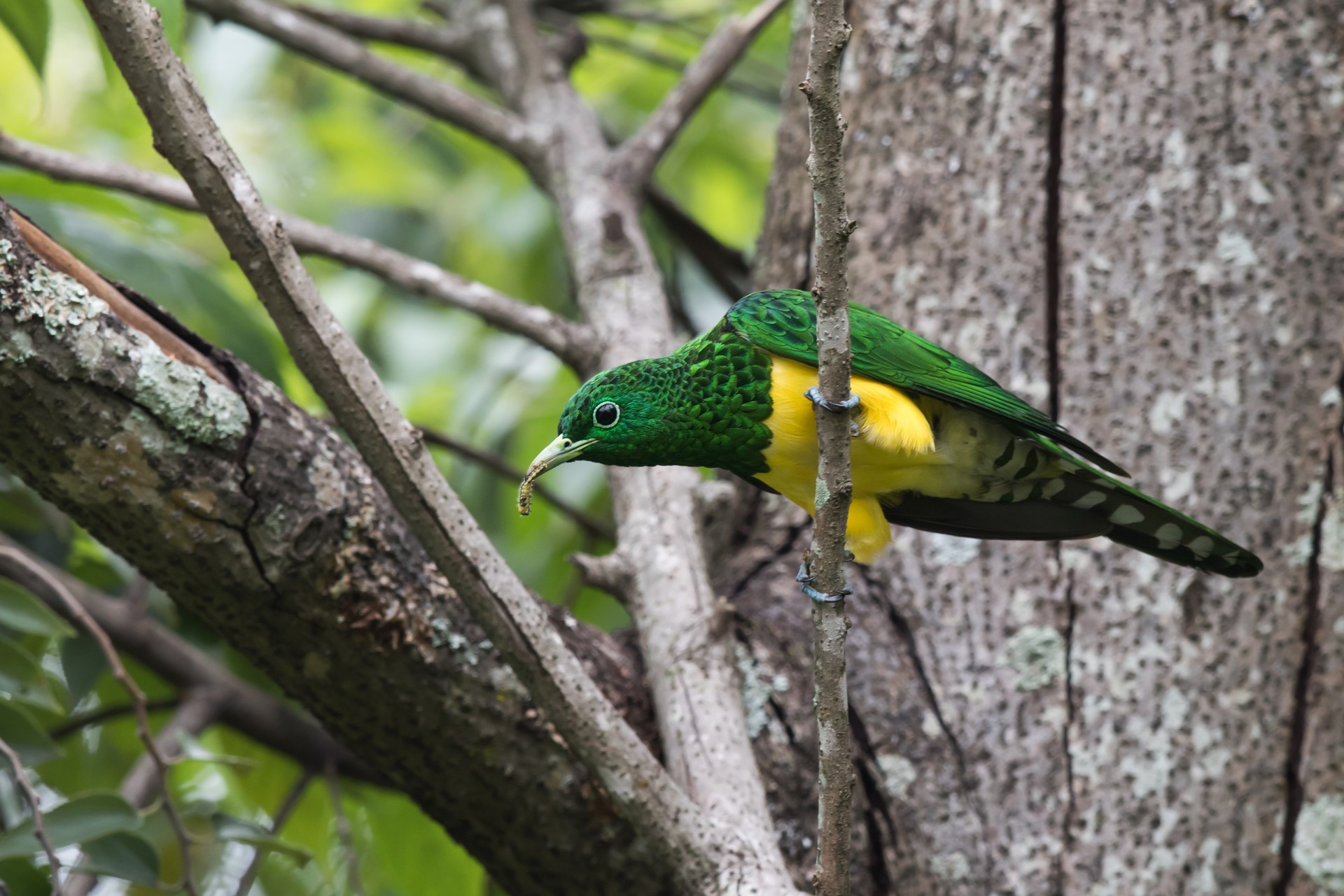 Bird in Bwindi National Park