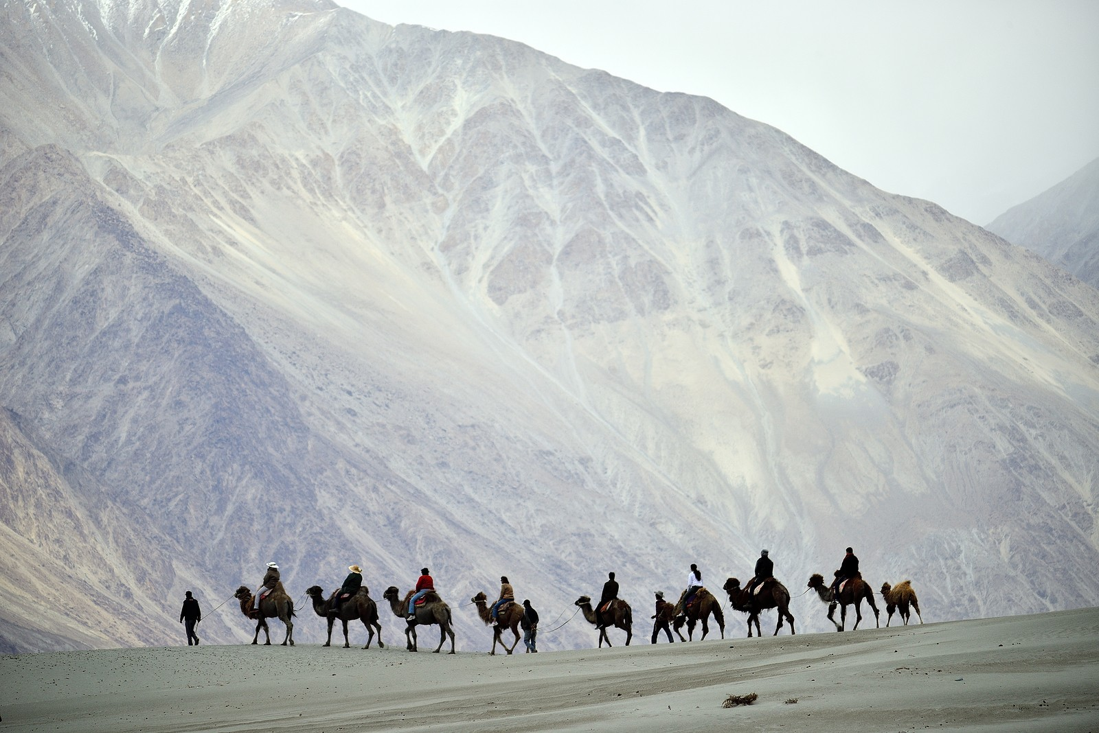 Camel trekking the silk route