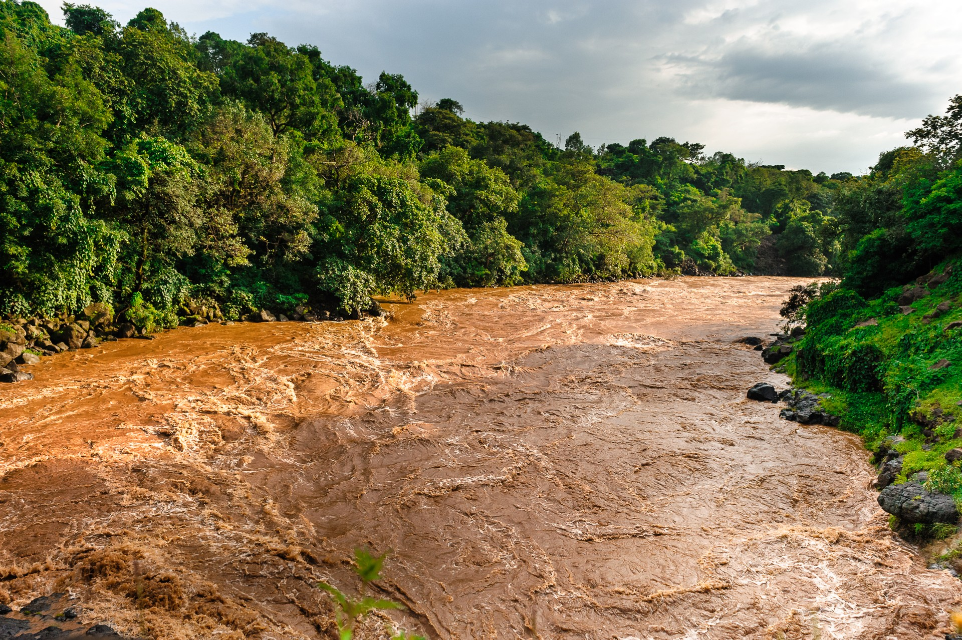Section of the River Nile