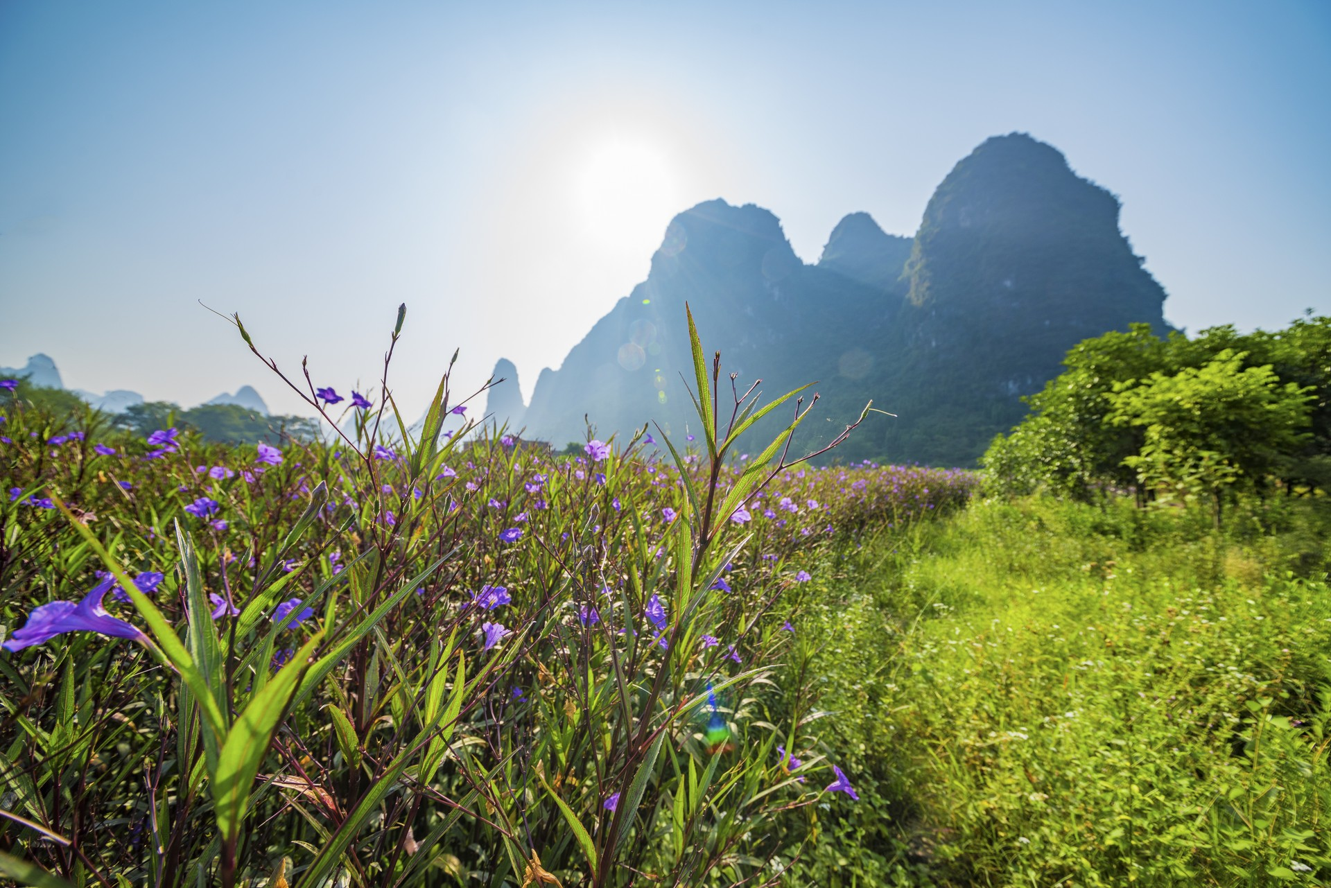 Wild flowers in Yangshuo, China