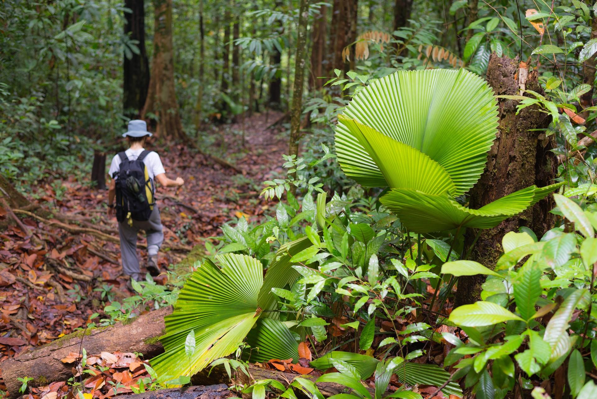 Exploring Borneo