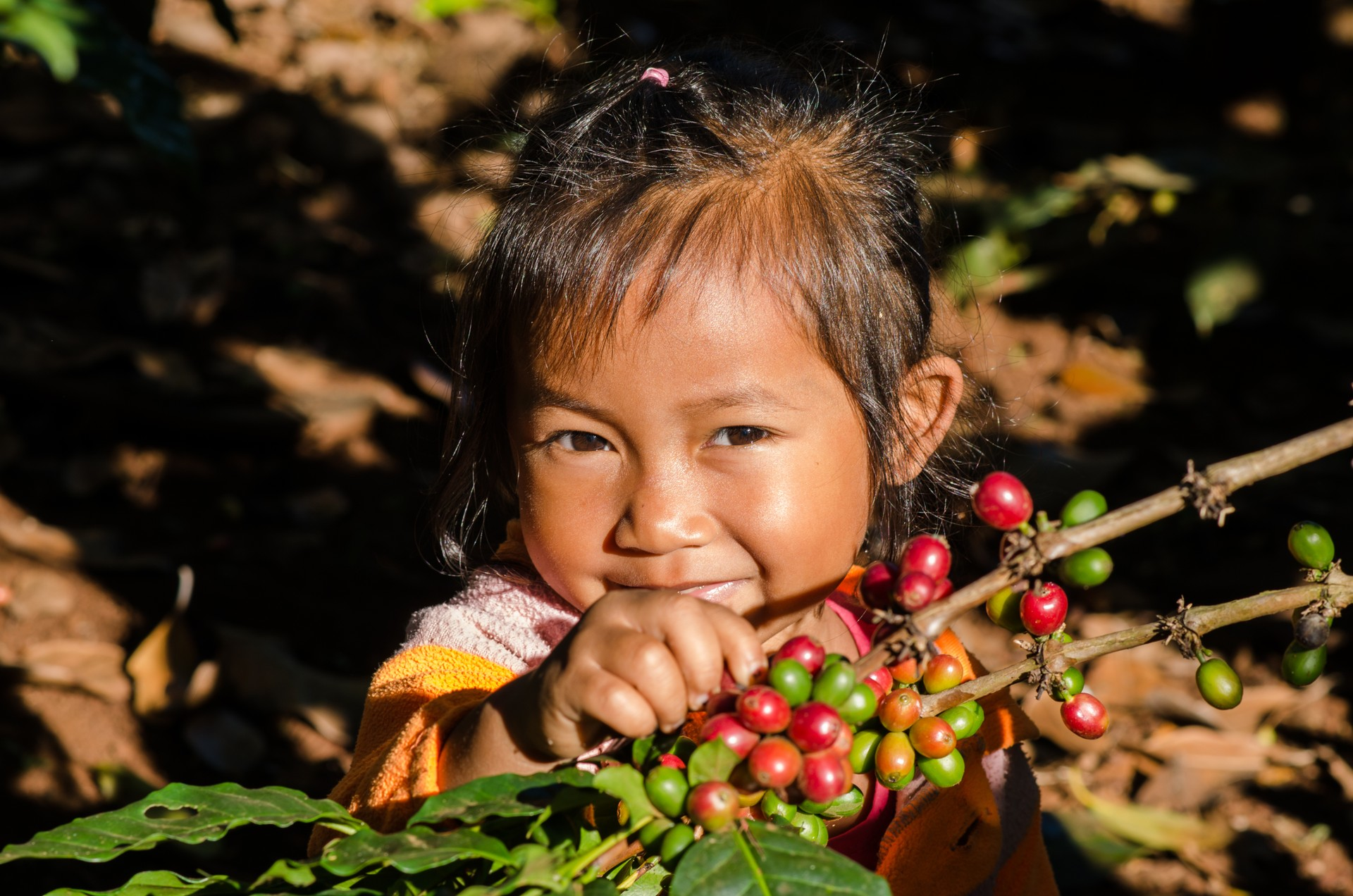 Child with coffee berries in Laos
