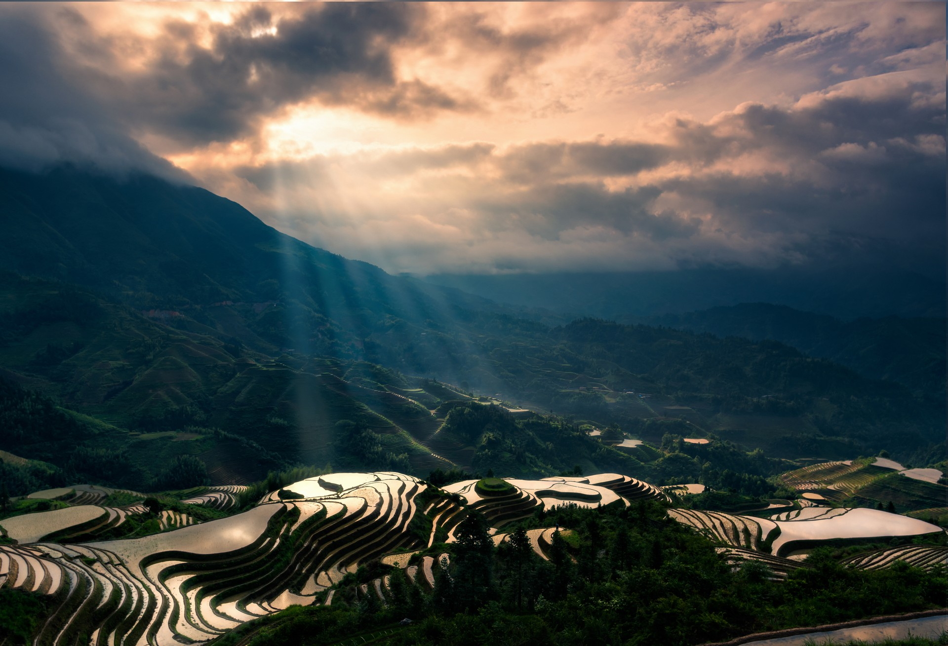 Sun reflecting on Longjing rice terraces