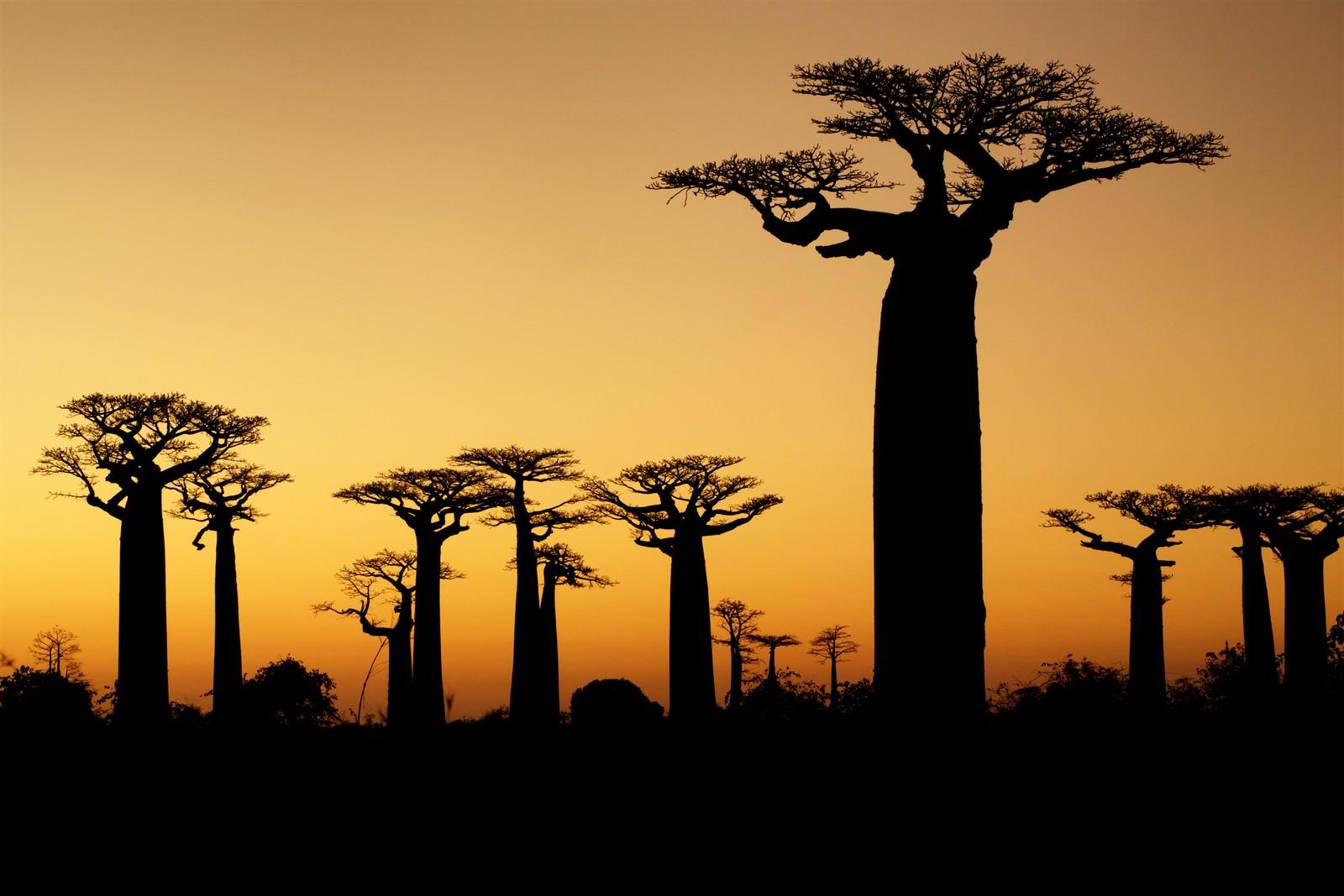 Madagascar skyline