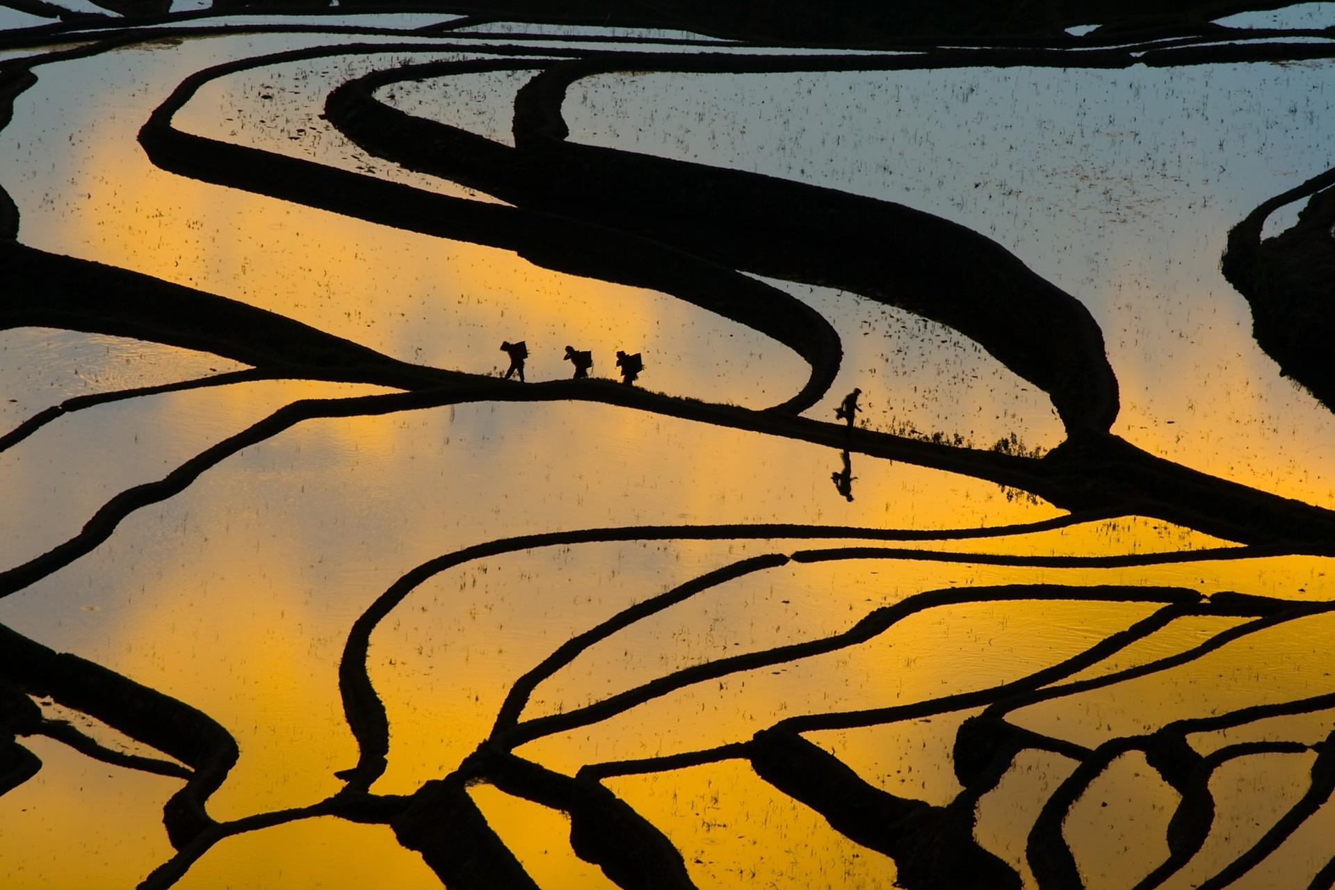Rice paddies in Yunnan, China
