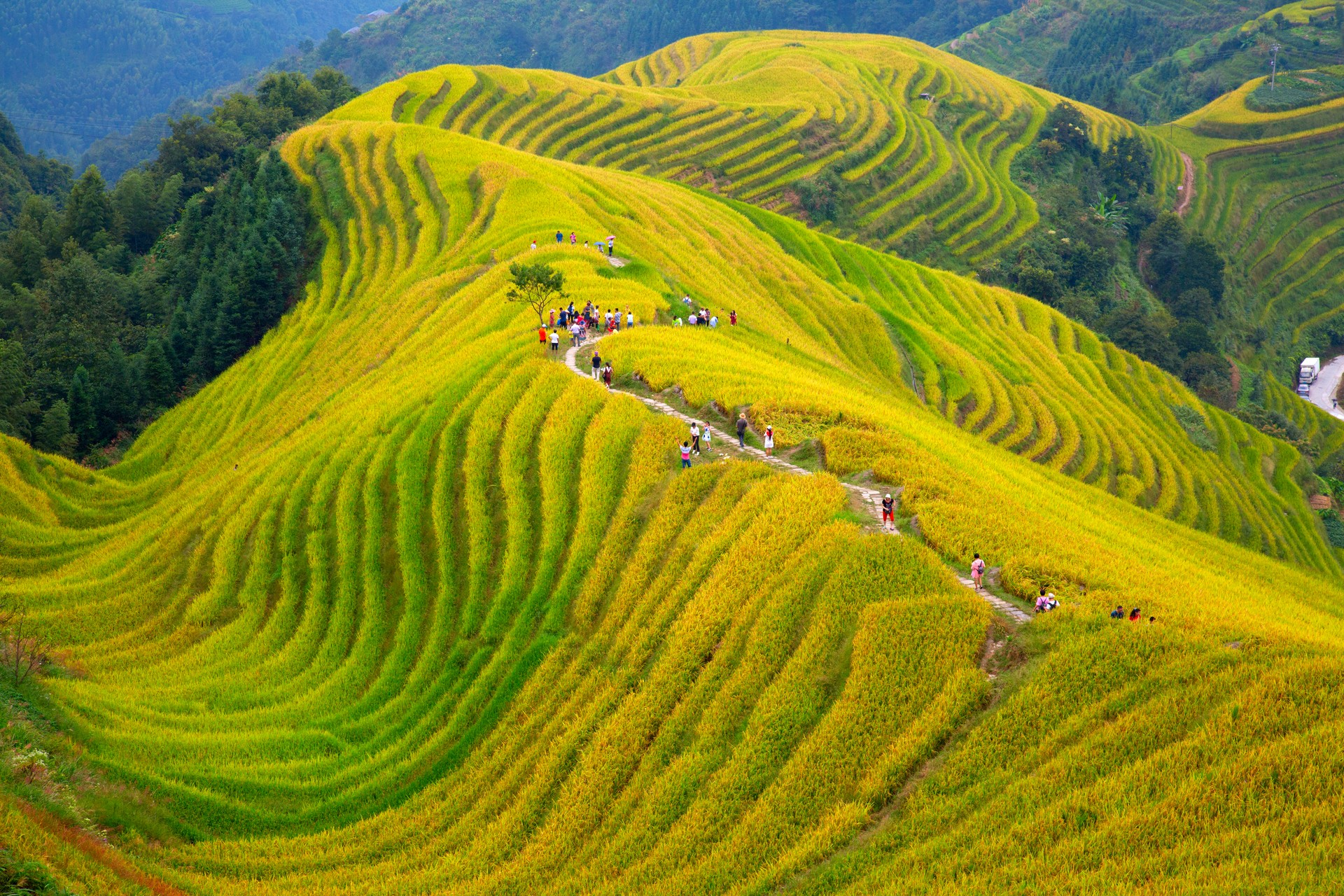 Longji Rice Terraces - 'Dragons backbone' - in China