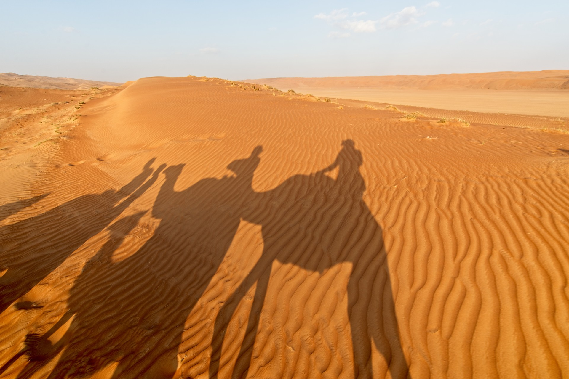Shadows of camels in Wahiba Sands in Oman