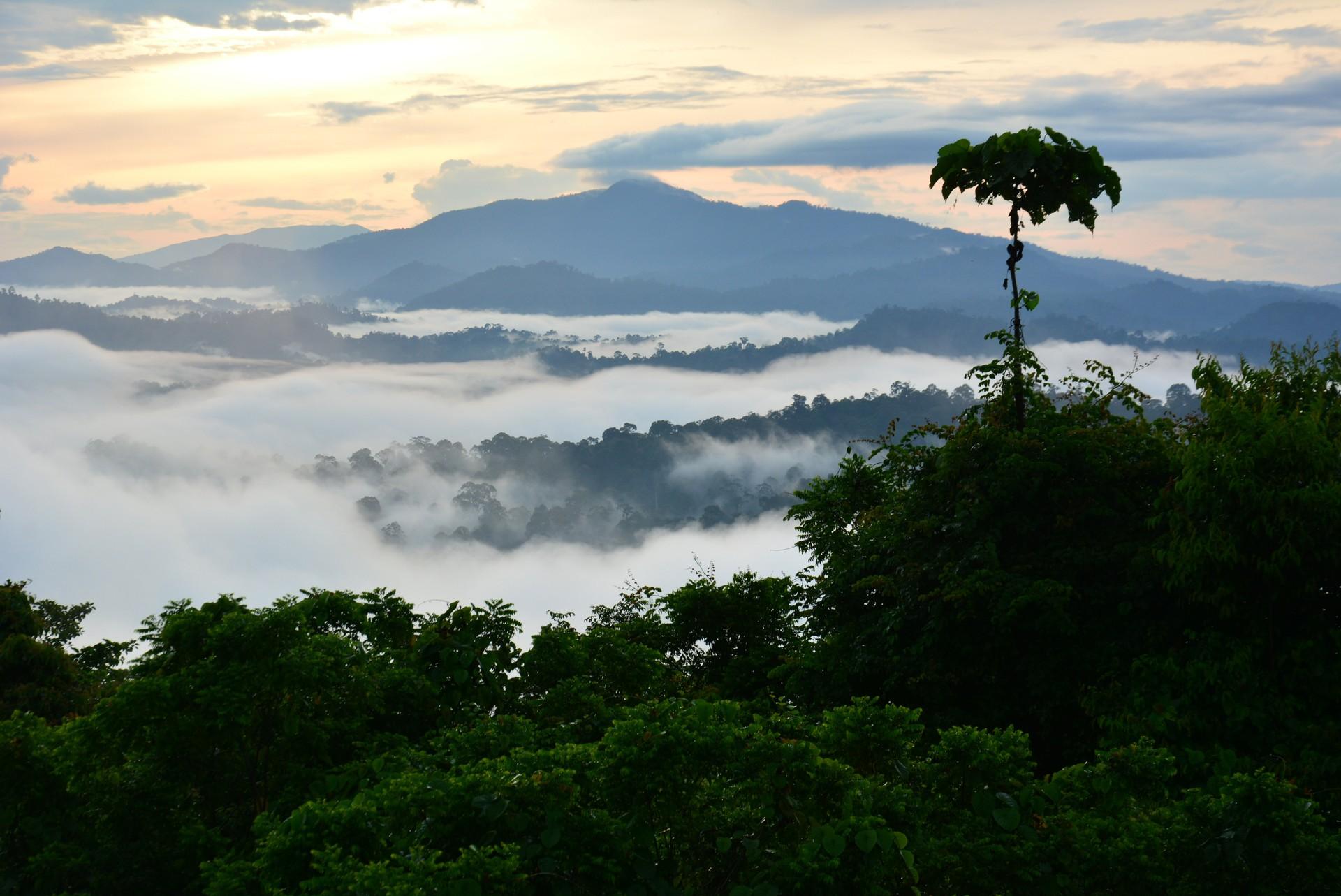 Sabah rainforest Borneo