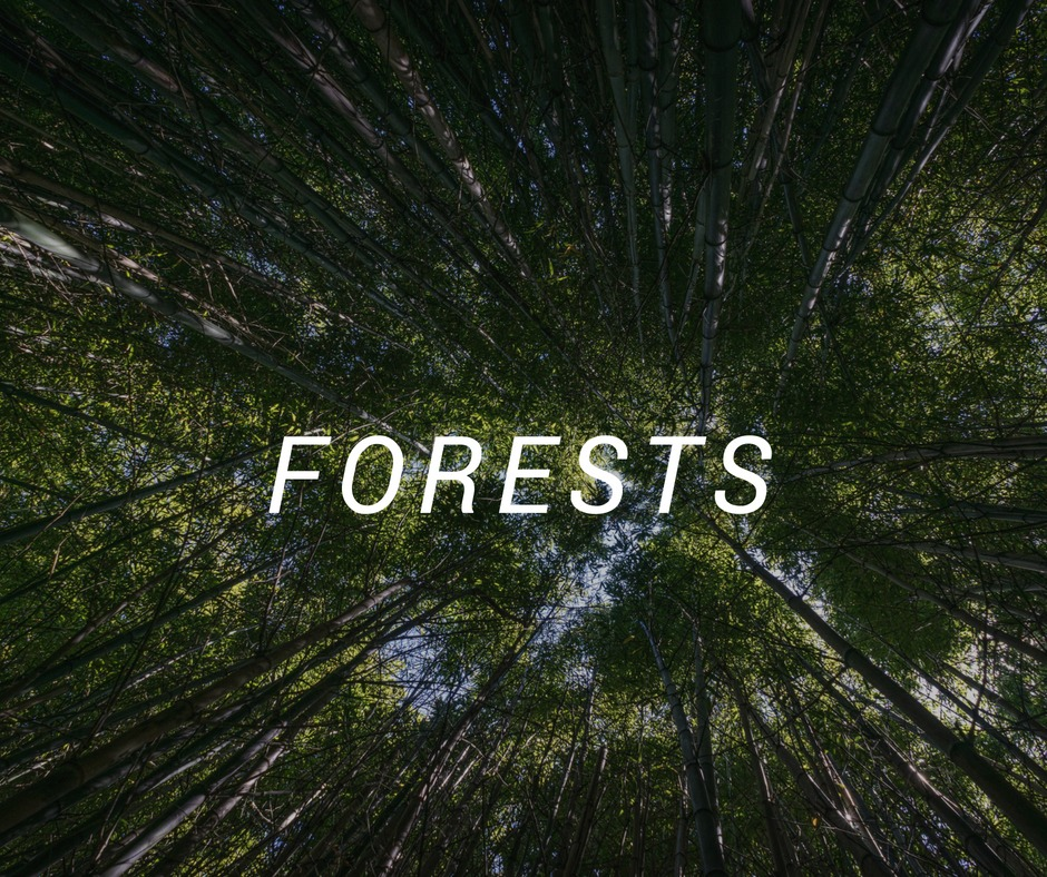 Forest Travel Destinations