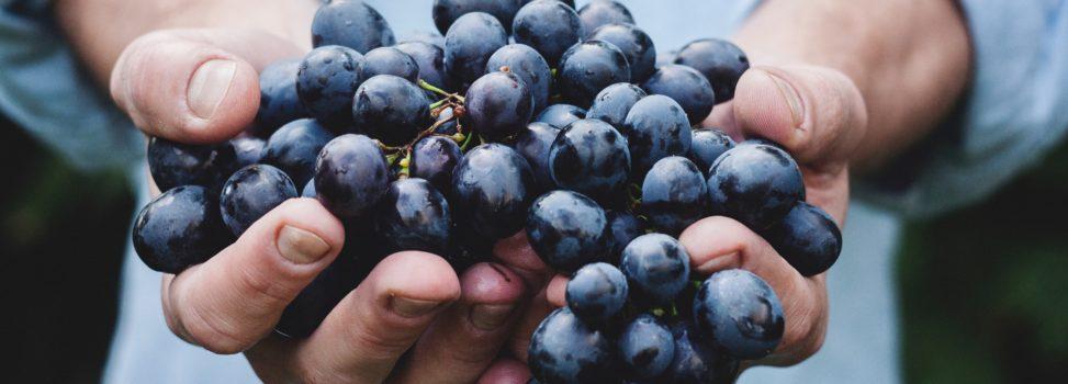 Destinos vacacionales con viñedos