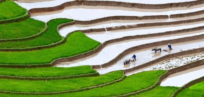 Vietname19