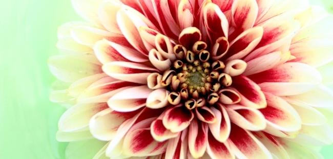 Flor%20(2)