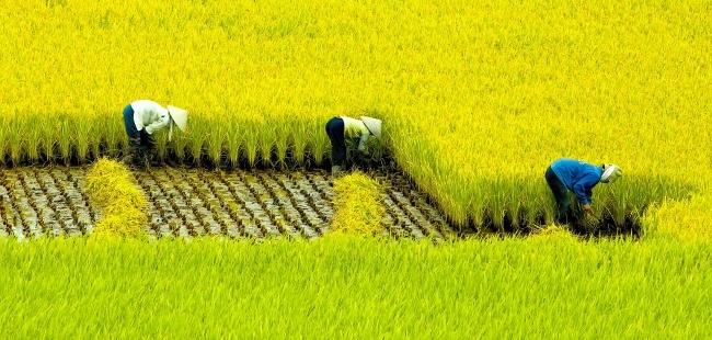 Vietname2