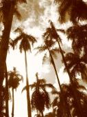 Palmentuin