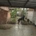 Wachhund/Wilde Bestie