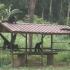 Im Affenhaus