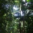 Yidney Rainforest
