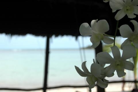 Koh Samui - Chawaeng Beach Koh Samui