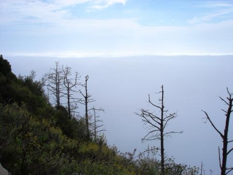Graskop - Aussichtspunkt Wonder View im Nebel