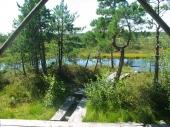 Moor-Holzpfad im Kemeri-Nationalpark