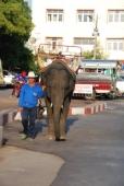 Elefant bei Surin