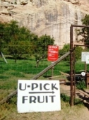 Apfelernte @Capitol Reef NP