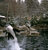 Zoo in Vancouver