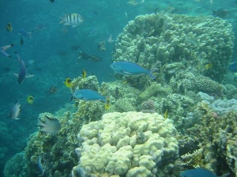 Marsá al `Alam - Unterwasserwelt