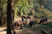 Elefanten-Trainingszentrum