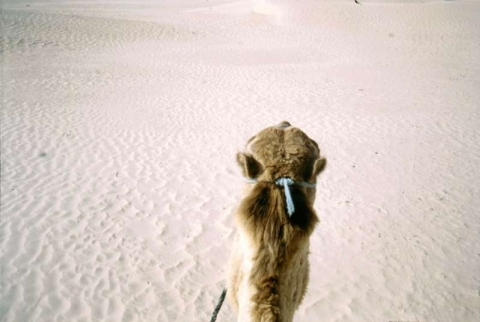In der Sahara