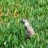Squirrel La Jolla