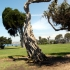 Torry Pine La Jolla
