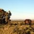 Landschaft mit Joshua Trees