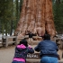 Touristen am General Sherman Sequoia