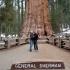 General Sherman Sequoia NP