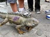 Parke de Iguanas