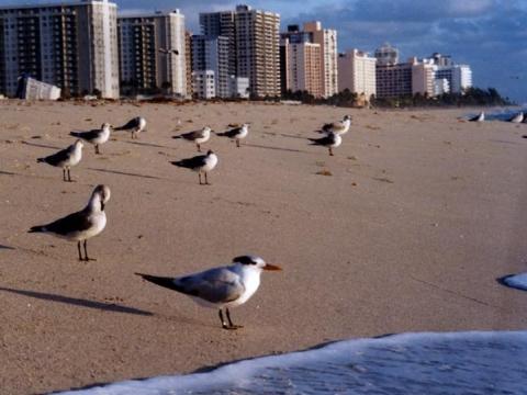 Miami - Miami Beach