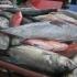 Fischanlieferung