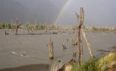 Bosque Muerto am Río Ibáñez