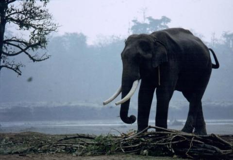 Nārāyangarh - Chitwan-Nationalpark