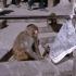 Beim Affentempel