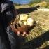 Essen der Inselbewohner